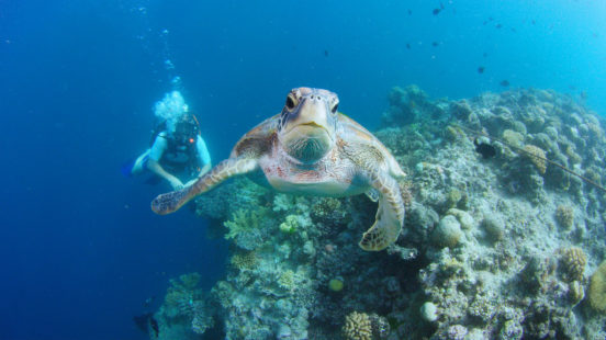 Wonders of the Great Barrier Reef with Iolo Williams